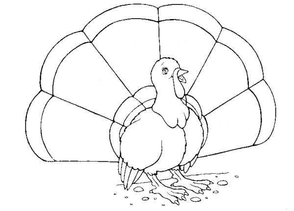 Turkey Coloring Page 2