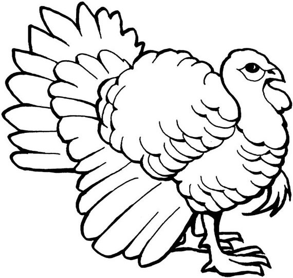 Turkey Coloring Page 7