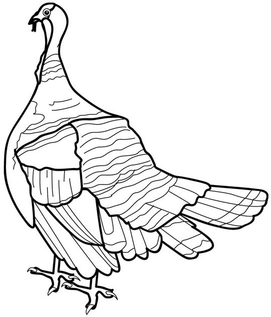 Turkey Coloring Page 8