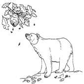 Bear Coloring Page 4