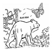 Bear Coloring Page 5