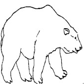 Bear Coloring Page 10