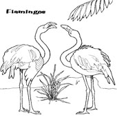 Flamingo Coloring 3