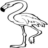 flamingo coloring flamingo coloring pages - Flamingo Coloring Pages