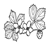 Flower Coloring Page 4