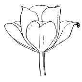 Flower Coloring Page 14